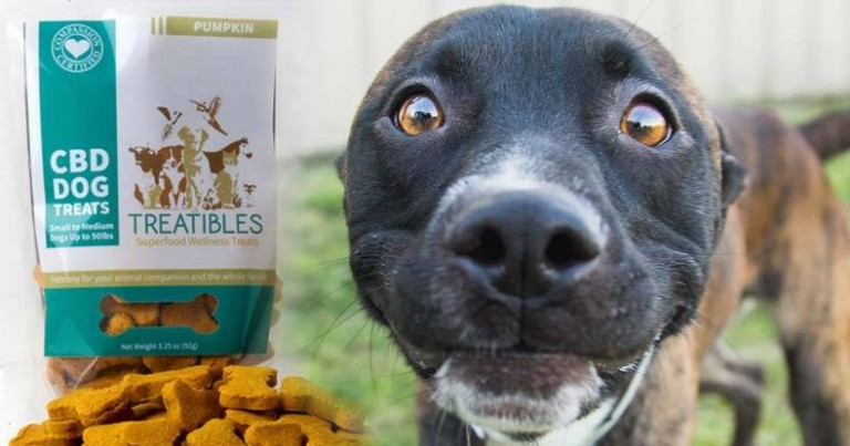 Is Jumping A Bad Behavior For Dogs
